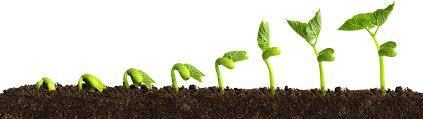 biostim plant growth